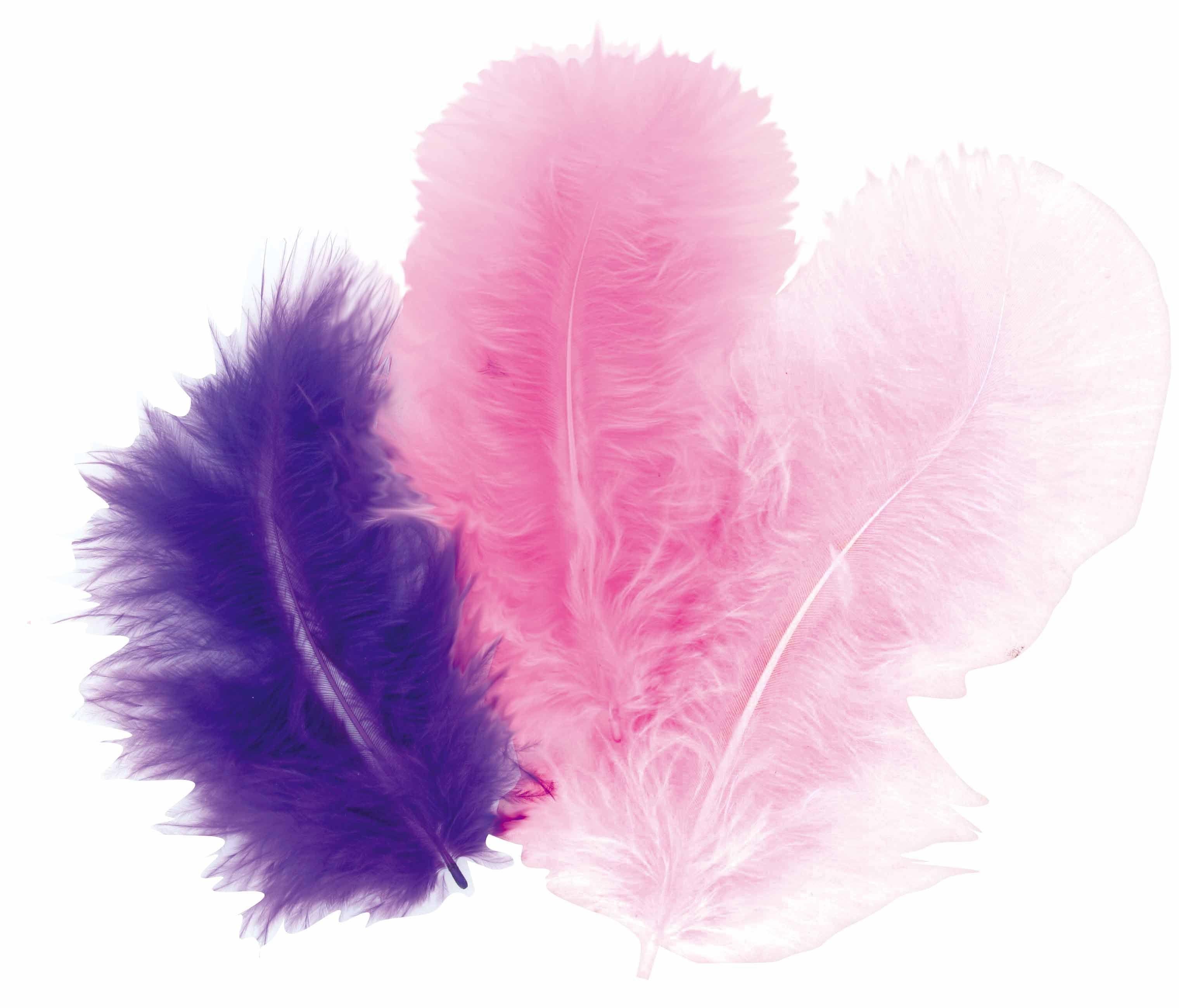 50 plumes d 39 oiseaux cama eu de violet aylia - Signification des plumes d oiseaux ...